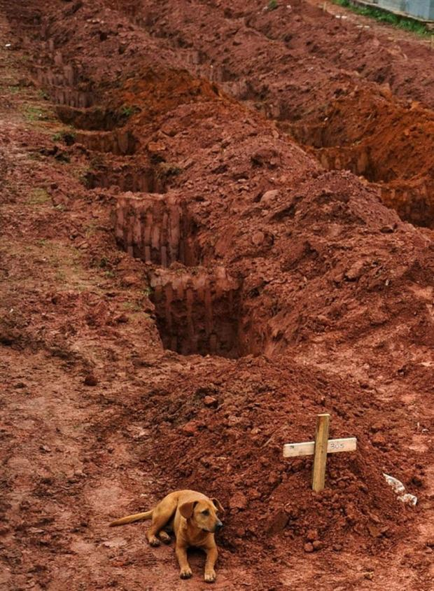 Dog Waiting on Owner's Grave in Brazil